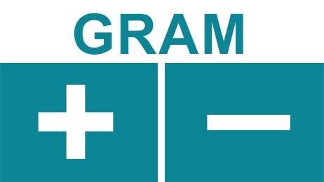 Gram +/-